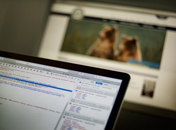 Website and web development portfolio